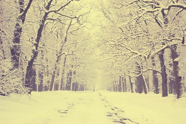 Vicolo di alberi innevati con molta neve
