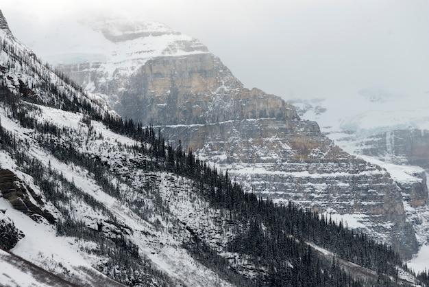 Alberi innevati sulla montagna, lake louise, parco nazionale di banff, alberta, canada