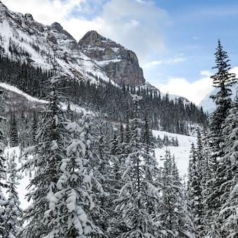 Alberi innevati con la montagna, lake louise, parco nazionale di banff, alberta, canada