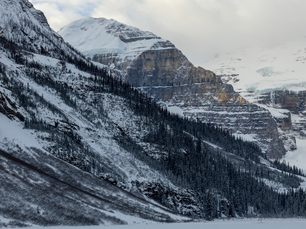 Alberi innevati con le montagne nell'inverno, il parco nazionale di lake louise, banff, alberta, canada