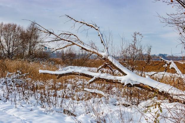 Tronco innevato di un albero caduto lungo la strada del villaggio nella soleggiata giornata invernale. paesaggio invernale rurale