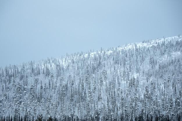 Passo della neve. inverno artico colline boscose di neve. paesaggio minimalista.