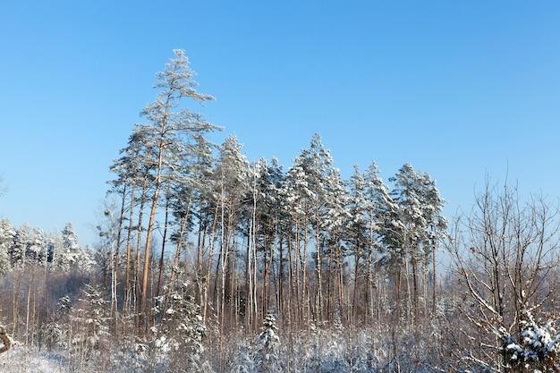 Neve fotografata nella stagione invernale, che è apparsa dopo una nevicata. avvicinamento,