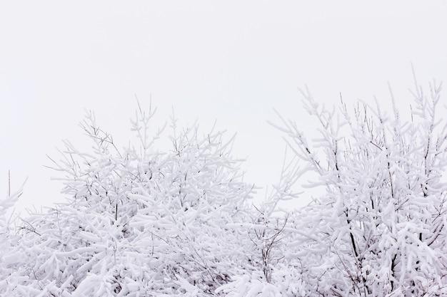 Neve e brina sui rami dei cespugli, inverno con ramoscelli ricoperti di brina