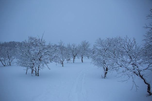 Alberi di neve e foreste a nuorgam, lapponia, finlandia