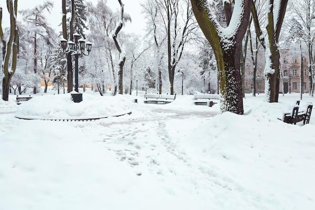 Alberi innevati nel parco cittadino di inverno