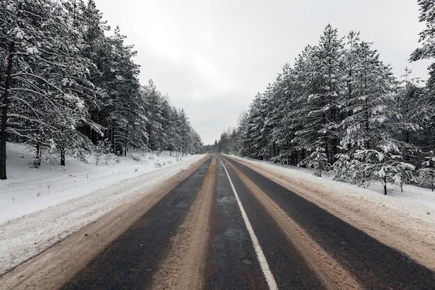 Giovani alberi di pino innevati in inverno, neve bianca distesa sull'albero, temperatura fredda