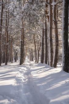 Percorso di cumuli di neve nella foresta dopo una massiccia tempesta di neve