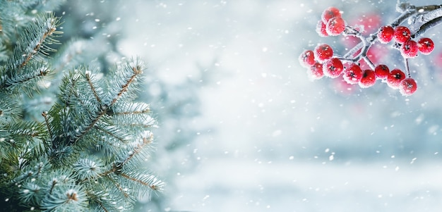 Nevicate nella foresta invernale, rami di abete e cenere di montagna nella foresta su sfondo sfocato durante la bufera di neve
