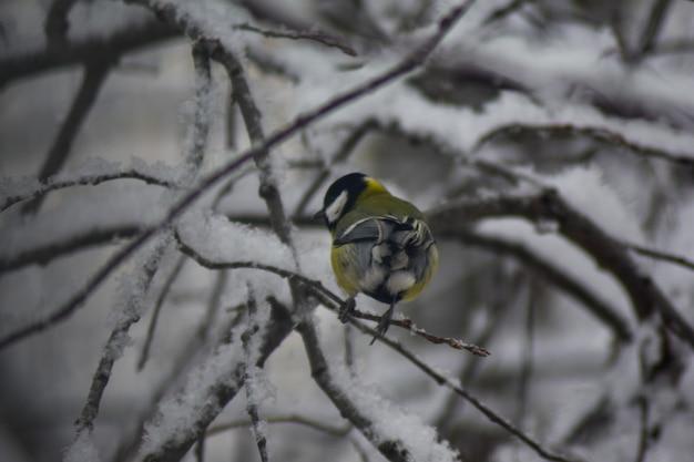 Pupazzo di neve si siede su un ramo d'inverno