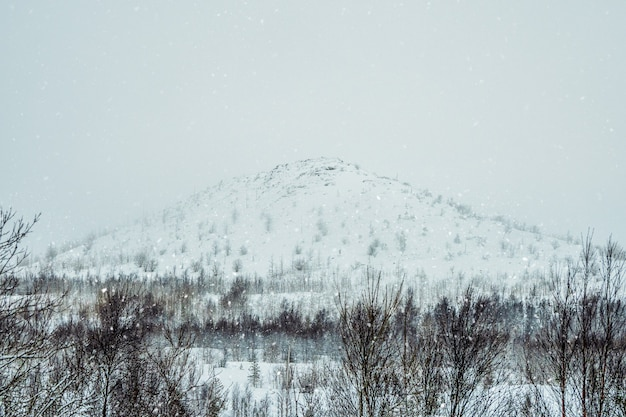 Collina artica innevata con vegetazione rara. monchegorsk. russia.