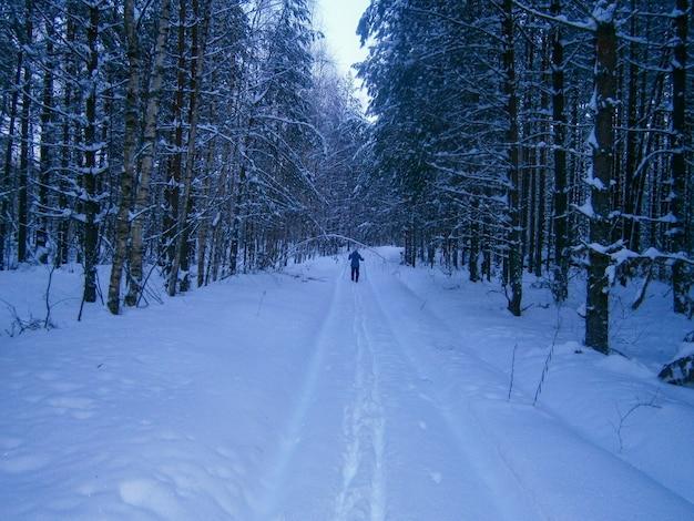 Notte d'inverno nella foresta innevata