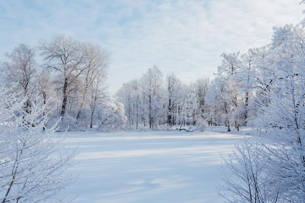 Lago nevoso nel parco in una bella giornata invernale di sole a san pietroburgo, russia.