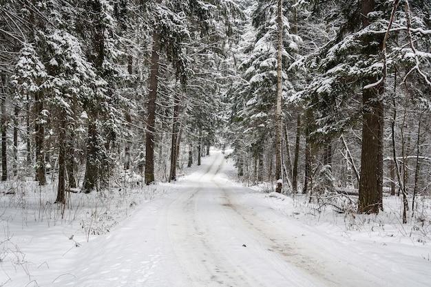 Strada innevata nella foresta in una giornata nuvolosa invernale