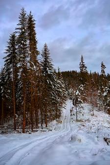 Nevoso, bosco invernale in montagna, pini, alberi di natale, una strada nella neve tra gli alberi