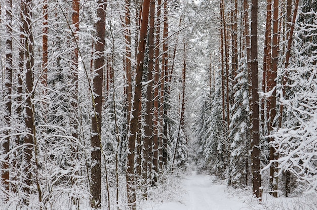Foresta invernale innevata in una giornata di sole strada bianca come la neve con una pista da sci alberi e cespugli coperti di neve