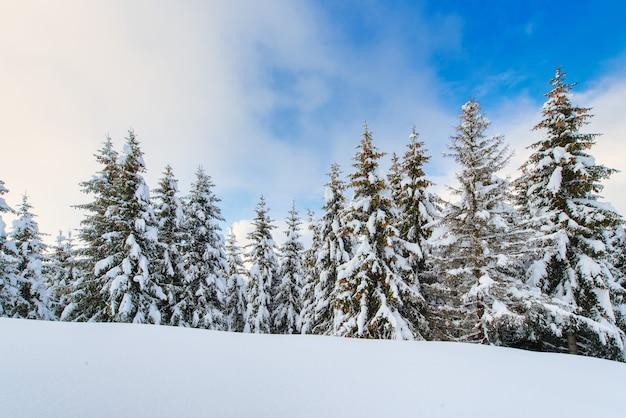 Paesaggio di montagna invernale innevato con abeti