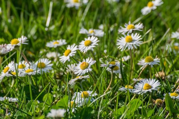 Sfondo morbido con prato di fiori di campo