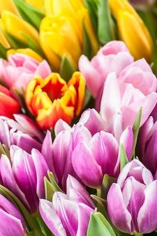 Morbida superficie floreale con tulipani, messa a fuoco selettiva