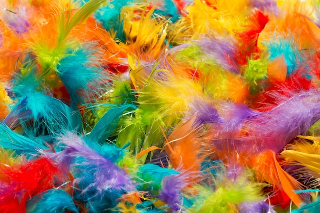 Morbide piume di uccello dai colori vivaci soffici