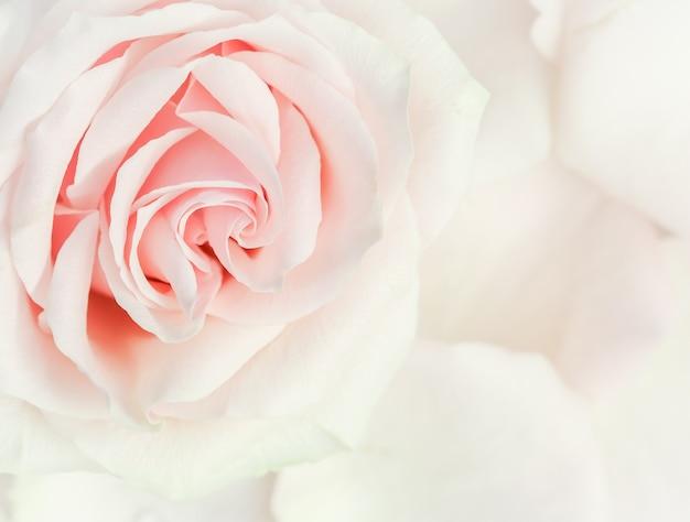 Soft focus astratto sfondo floreale rosa rosa fiore macro fiori sullo sfondo per le vacanze brand