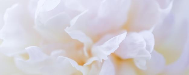 Floreale astratto sfondo floreale peonia bianca petali di fiori macro sfondo fiori