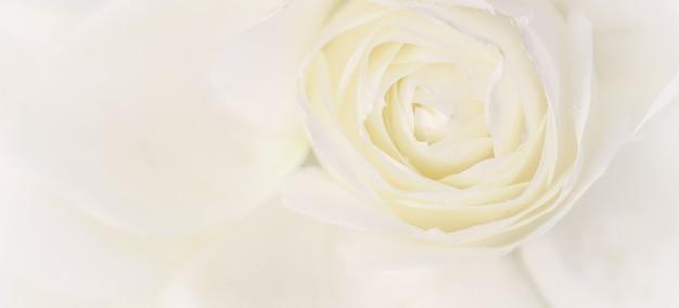 Floreale astratto sfondo floreale rosa bianca fiore macro fiori sullo sfondo per il marchio di vacanza