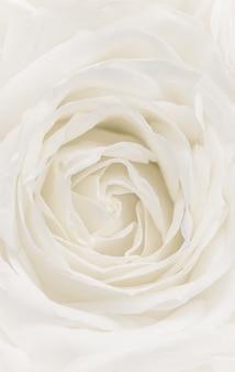 Floreale astratto sfondo floreale rosa bianca fiore macro fiori sfondo per le vacanze brand
