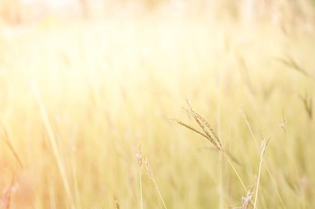 Messa a fuoco morbida campo di erba fuori porta paesaggio, colore tono d'epoca.