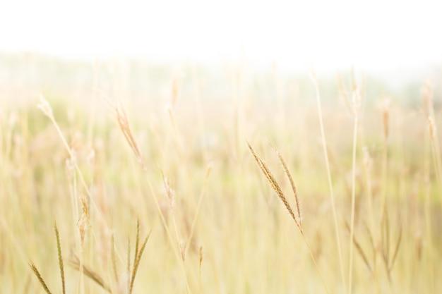 Soft focus campo di erba fuori porta paesaggio, colore tono vintage.