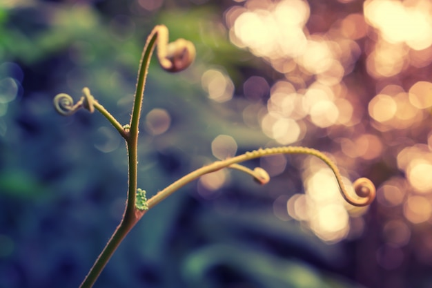 Soft focus verde foglia primavera natura carta da parati sfondo colorato bokeh
