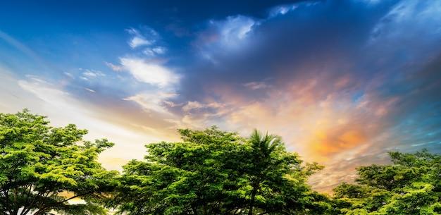 Soft e motion blur cielo blu al tramonto sulla scena rurale