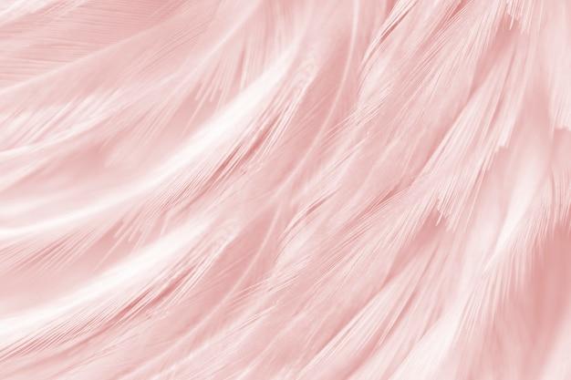 Morbido sfondo di piume rosa