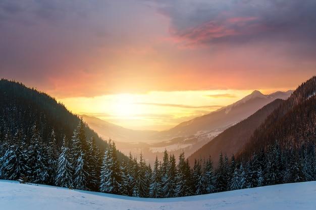 Morbido tramonto in inverno montagne innevate con pini scuri e alte vette distanti.