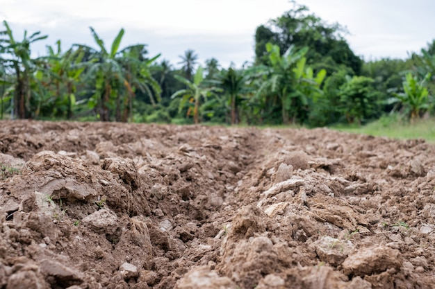 Il terreno era stato arato per la lavorazione del terreno per piantare alberi