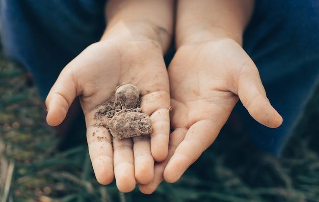 Terreno alla mano, palma, terriccio coltivato, terra, terreno, giardinaggio biologico, agricoltura. primo piano della natura. struttura ambientale, modello. fango sul campo.
