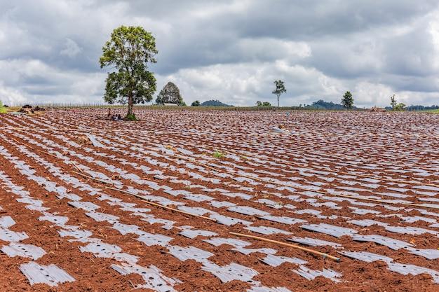 Preparazione del terreno e colture in crescita