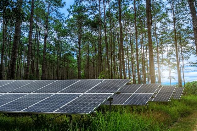 Pannello solare su bosco di larici s