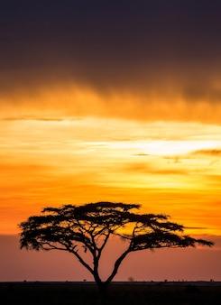 Albero solitario nella savana sullo sfondo di un tramonto mozzafiato. tramonto africano classico. africa dell'est.