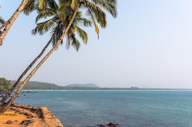 Paesaggio dell'india del sud di goa, palma a sinistra del mare