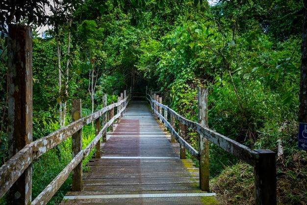 Sud-est asiatico, attrazioni turistiche, malesia, borneo, sabah, sandakan, sentieri forestali