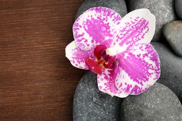 Pietre della stazione termale e orchidea sul tavolo di legno