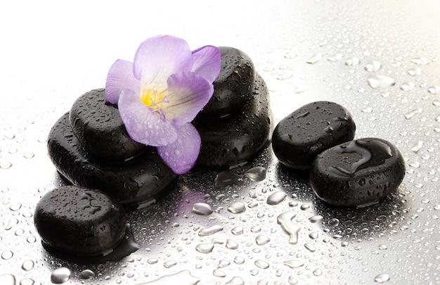 Pietre della stazione termale e fiore viola, su superficie bagnata