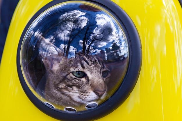 Zaino spaziale per un cattraveler un gatto cammina in uno zaino giallo guardando fuori dalla finestra camminando