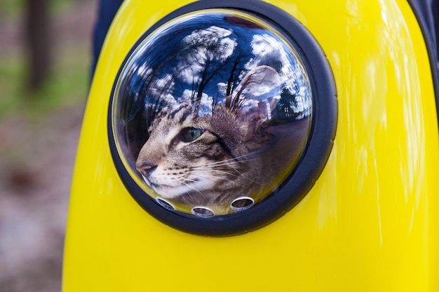 Zaino spaziale per un gatto viaggiatore un gatto cammina in uno zaino giallo guardando fuori dalla finestra