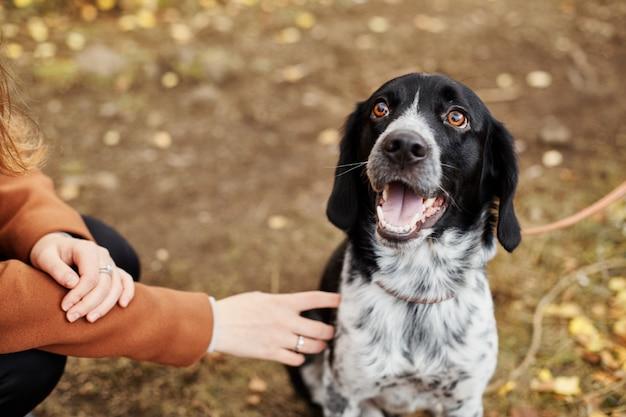 Il cane spaniel con le orecchie lunghe cammina nel parco
