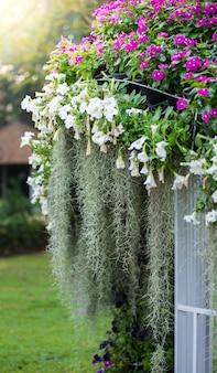Muschio spagnolo, fiori di crescione, petunia è disposizione del giardino