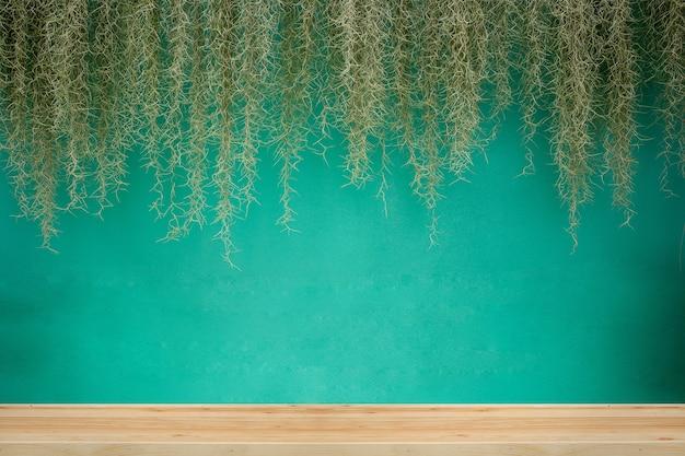 Muschio spagnolo con sfondo verde parete.