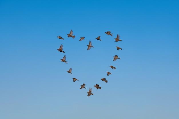 Stormo di passeri che vola in cielo, a forma di cuore, concetto di amore. gruppo di piccoli uccelli.