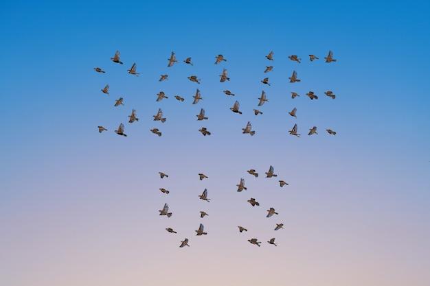 Stormo di passeri che volano in cielo, forma save us, concetto in via di estinzione. gruppo di piccoli uccelli.